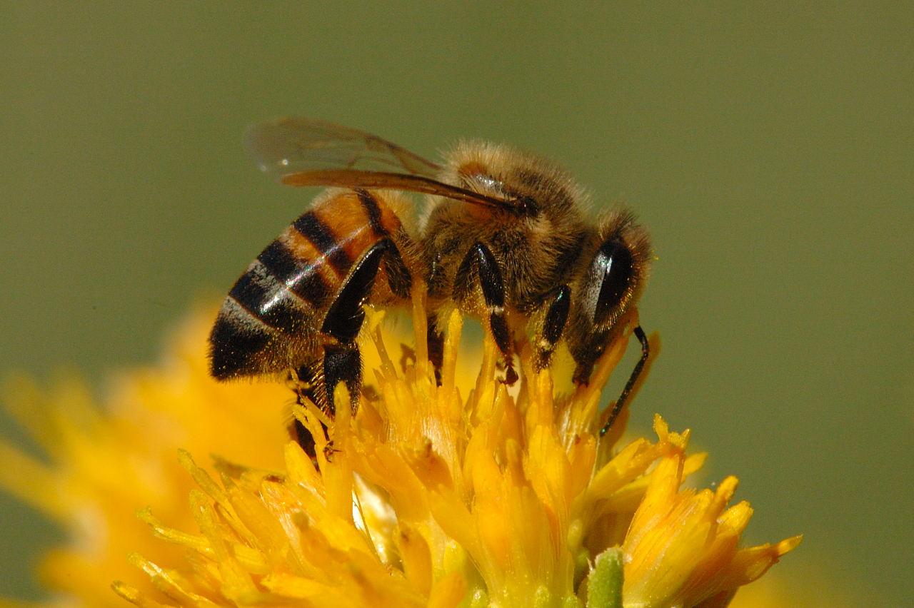 Belajar dari Kelembutan Lebah