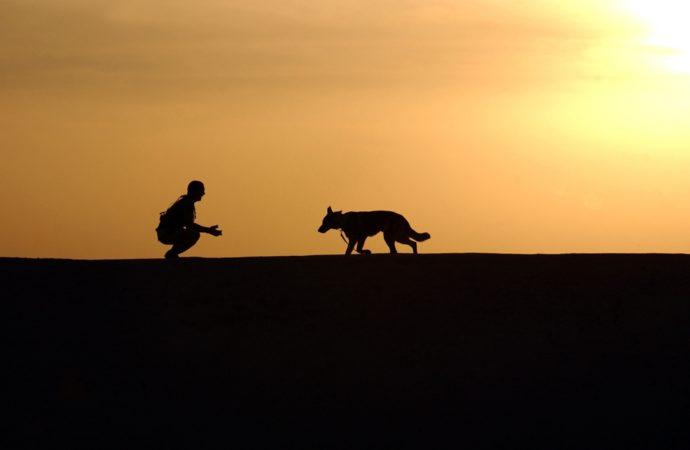 Asri Tanpa Anjing dan Patung