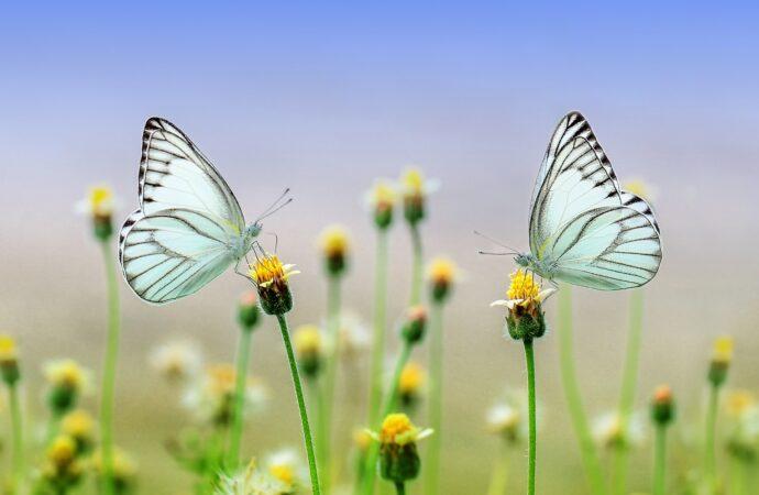 Berinvestasi untuk Masa Depan Seperti Menangkap Kupu-kupu