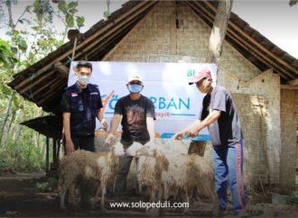 SOLOPEDULI Tebar 29 Sapi & 505 Kambing Qurban ke Pelosok Jateng, DIY dan NTT